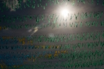 ABr140613DSC 1142