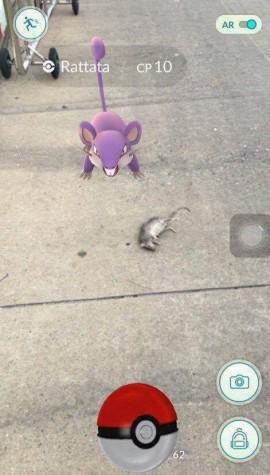 Deu ruim para o Rattata