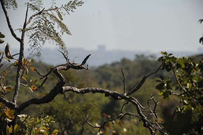 Árvore do Cerrado. Foto: EBC