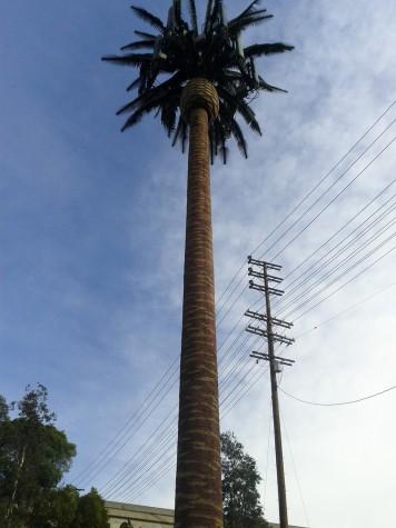 Antena de Celular em formato de Palmeira