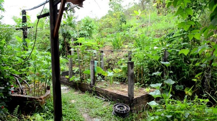 Água de esgoto é usada para irrigar plantas