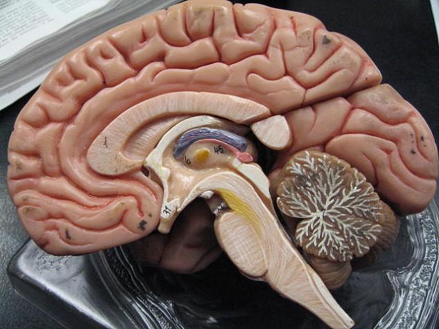 Resultado de imagem para cérebro