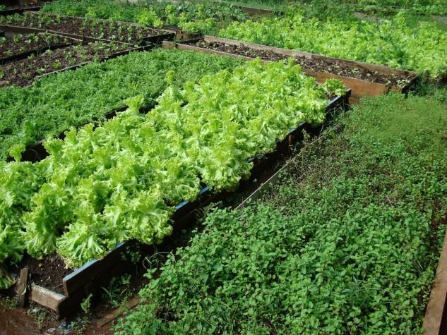 Ebc estudo mostra quantidade de vitamina k contida em 22 - Vitaminas para plantas de interior ...