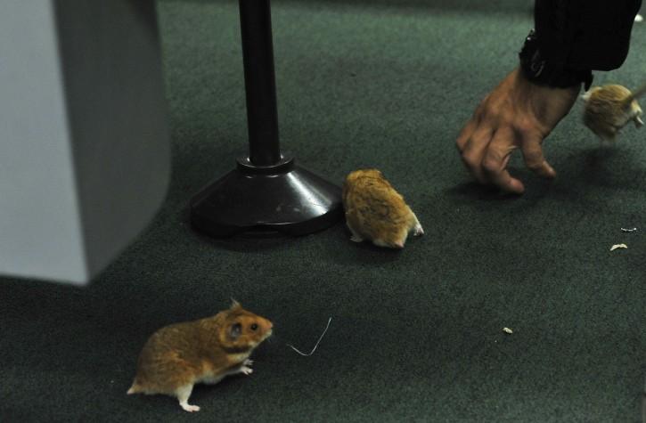Ratos soltos na Câmara durante sessão da CPI da Petrobras