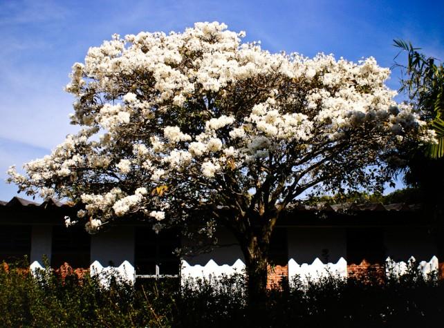 Hoje é Dia da Árvore