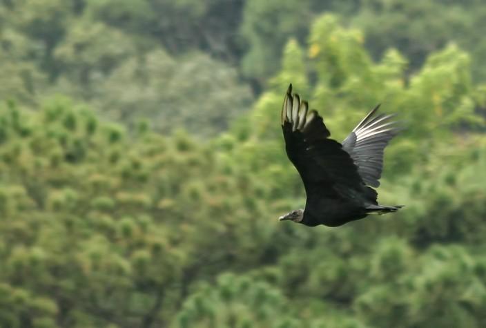 Meio Ambiente - pássaro