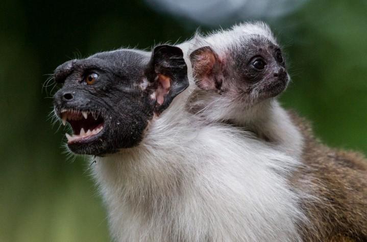 ebc animais em extinção conheça espécies ameaçadas por bioma