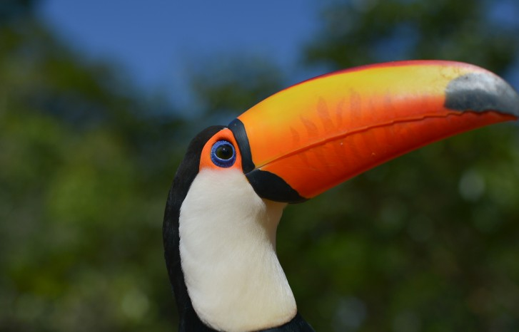 Projeto zoo toque, do Zoológico de Brasília tucano